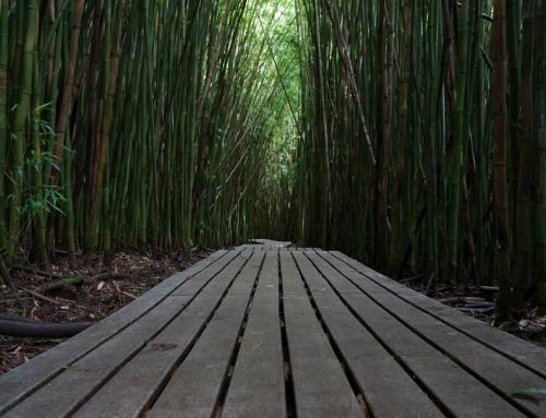 Tag 14 (Maui) – Das Ende der Road to Hana