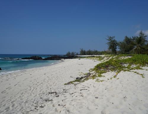 Tag 20 (Big Island) – Bester Kaffee und schönster Strand