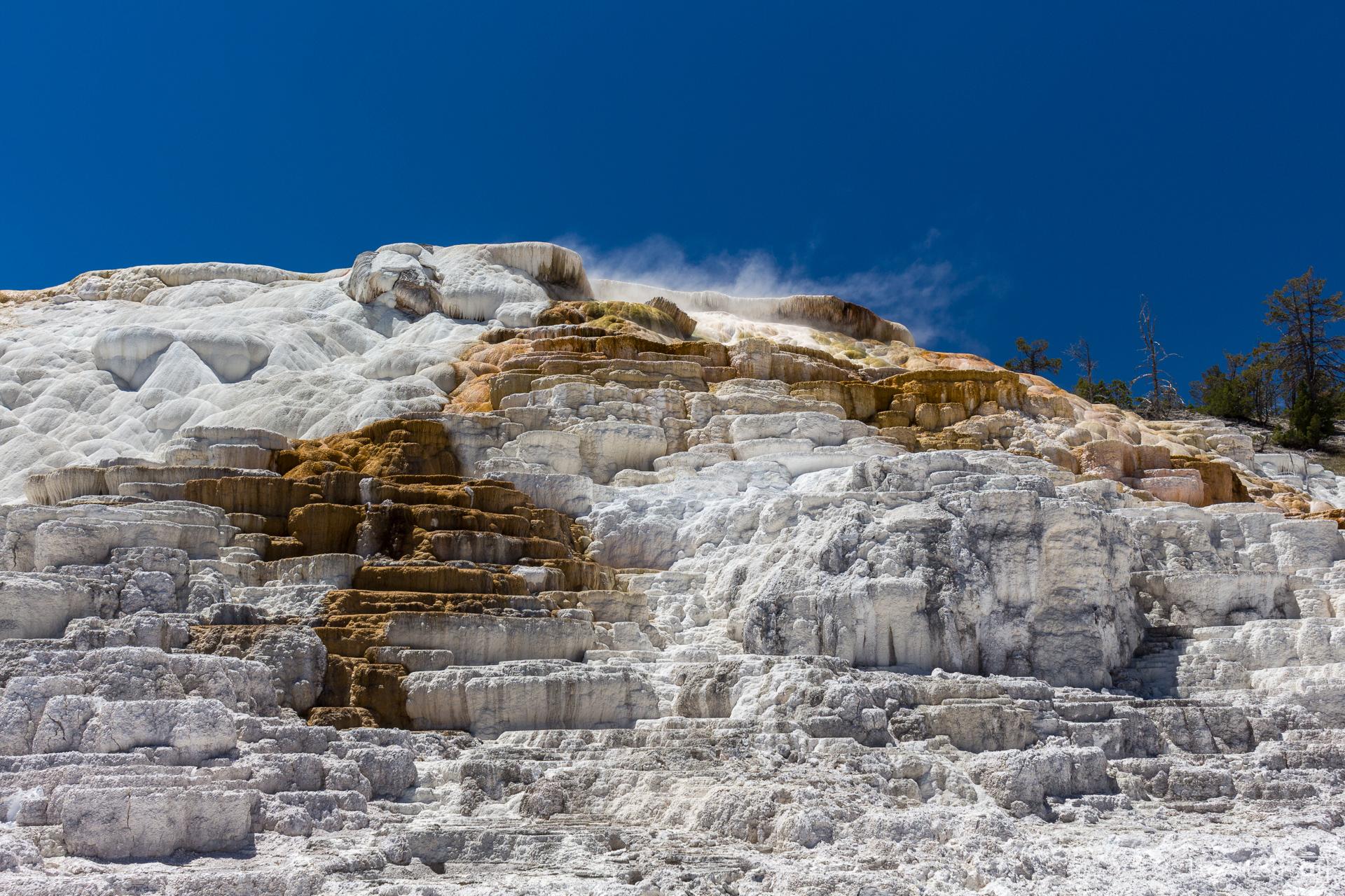 Tag 19 – Weite Landschaften und viele Tiere im Yellowstone