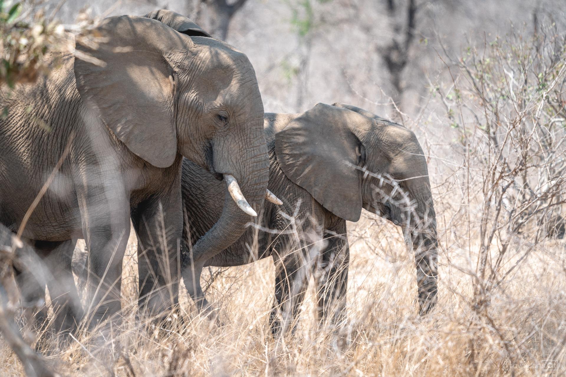 Südafrika Tag 3 – Erster Safaritag im Kruger Nationalpark (Teil 1)