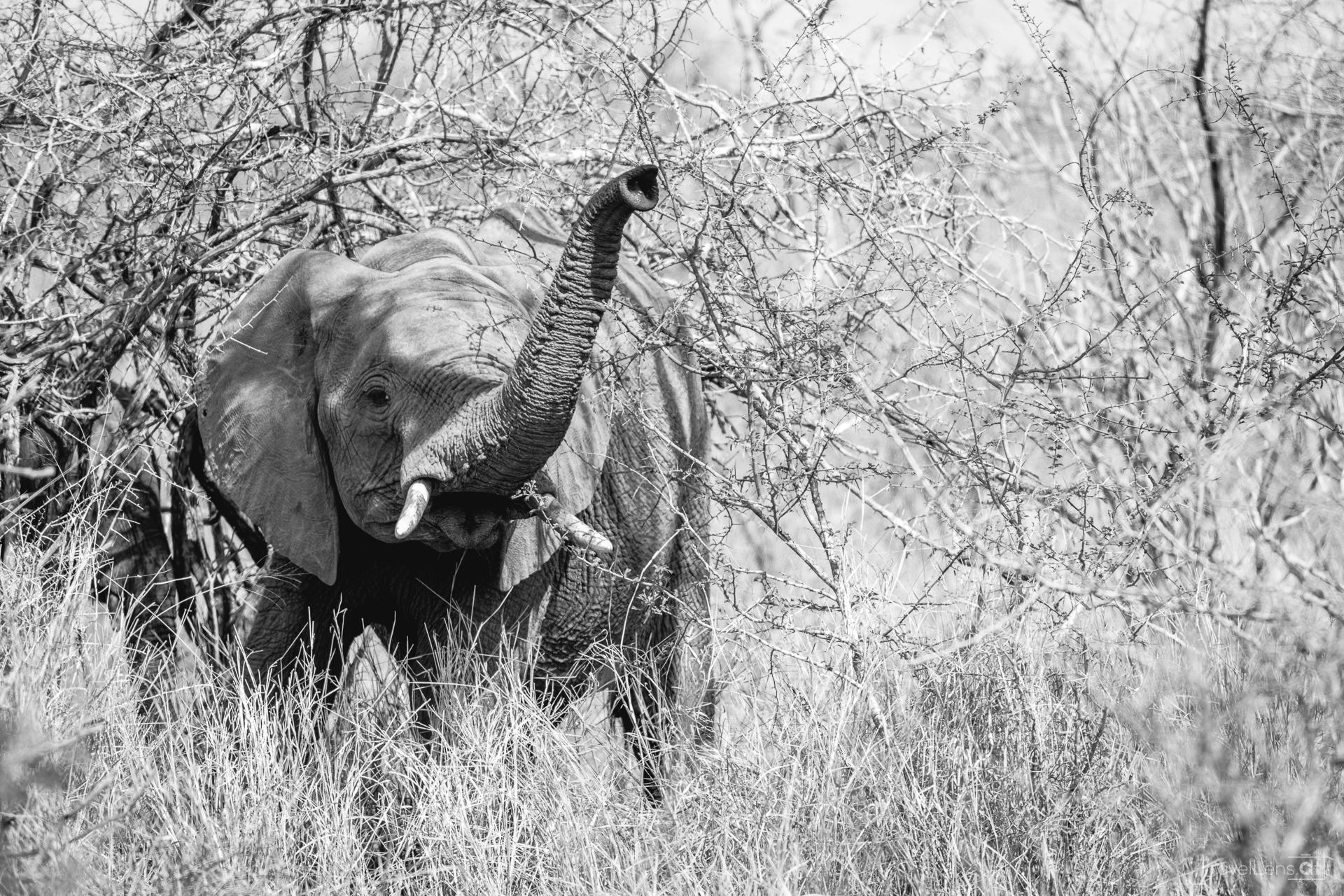 Südafrika Tag 4 – Safari am Weg ins Private Game Reserve (Teil 1)