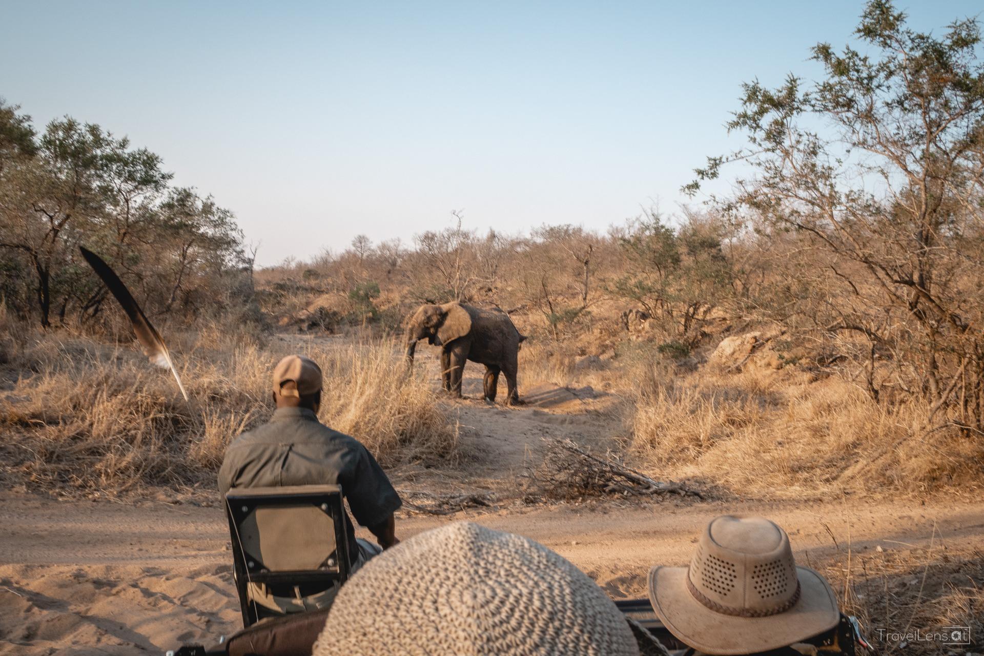 Südafrika Tag 4 – Safari am Weg ins Private Game Reserve (Teil 2)
