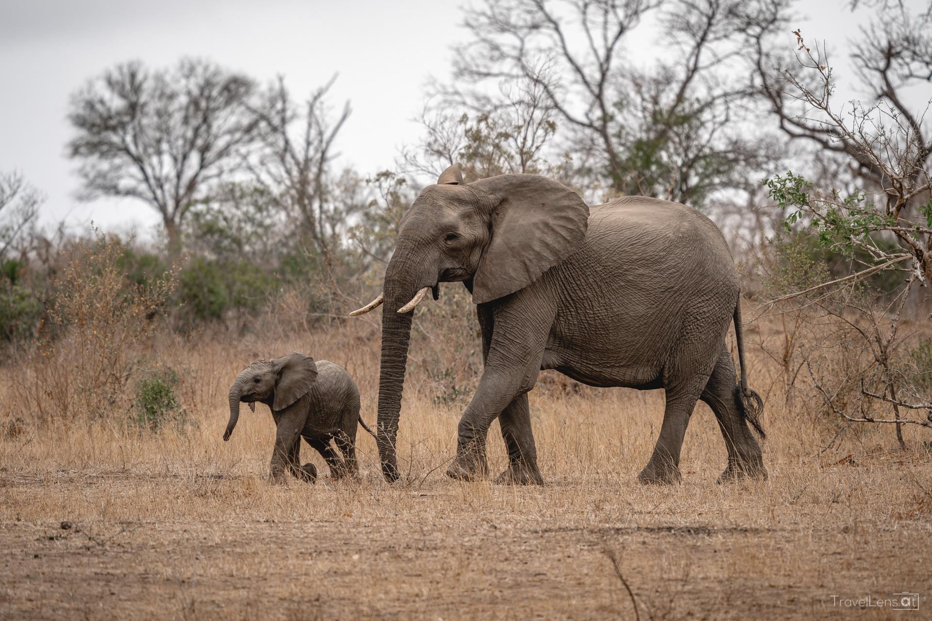Südafrika Tag 5 – Genialer Safaritag mit seltenen Tieren (Teil 2)