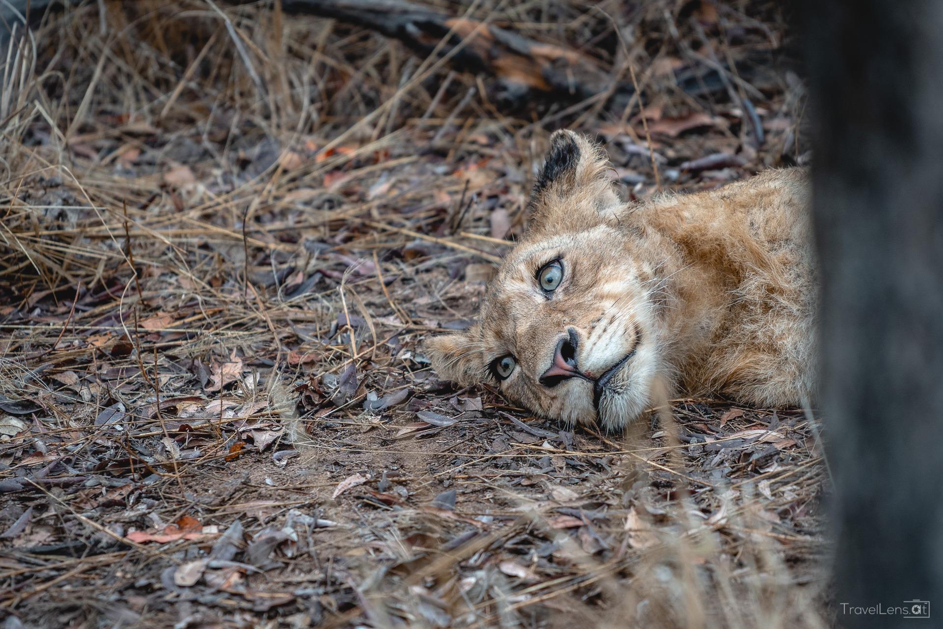 Südafrika Tag 6 – Zurück in den Kruger Nationalpark (Teil 1)