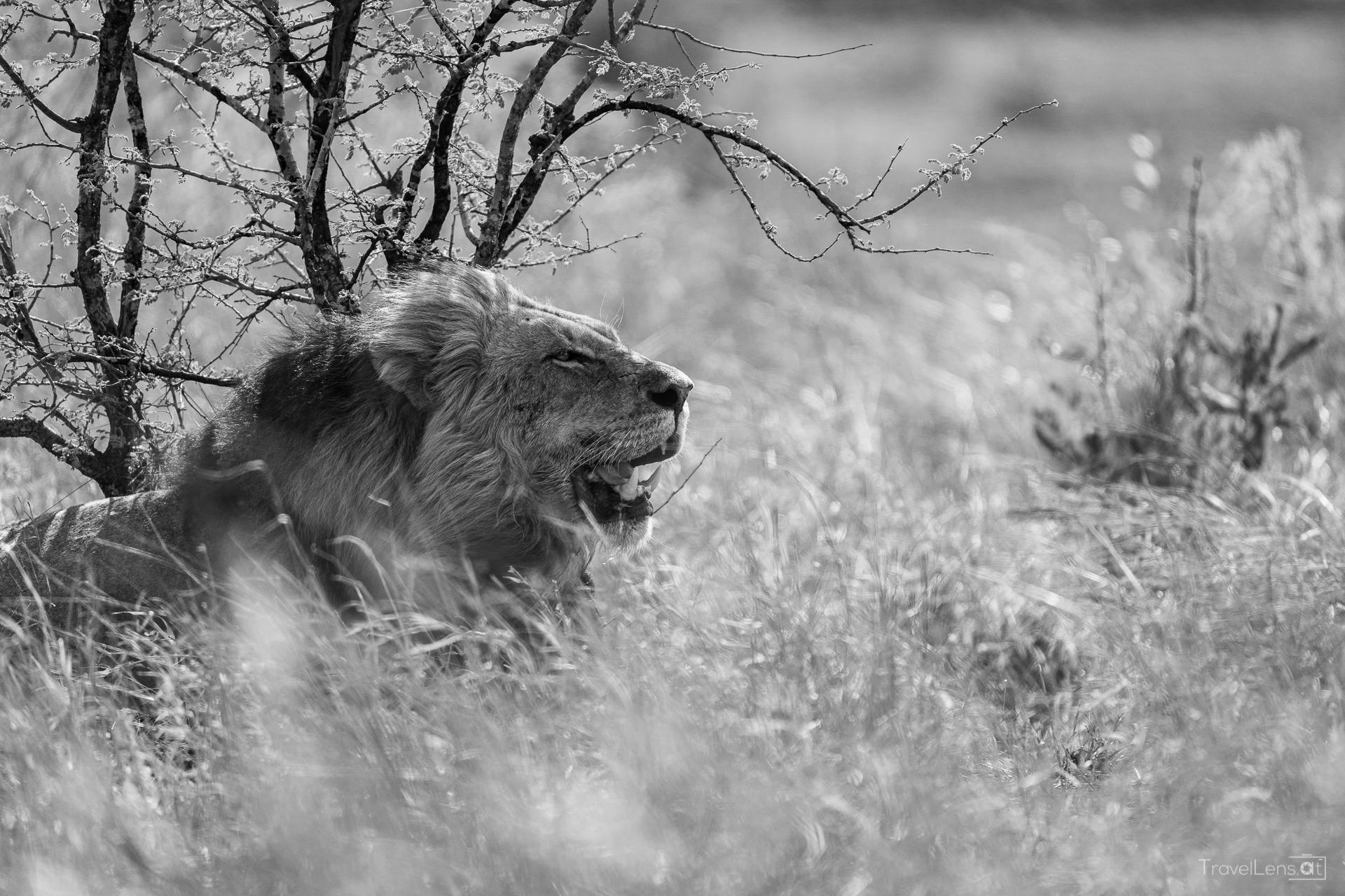 Südafrika Tag 6 – Zurück in den Kruger Nationalpark (Teil 2)