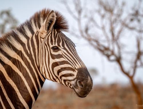 Südafrika Tag 7 – Der letzte Tag im Kruger National Park